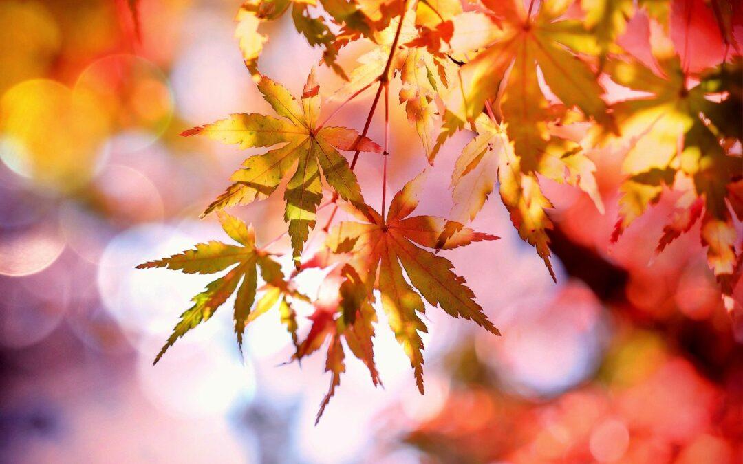 Őszi kanzashi típusok